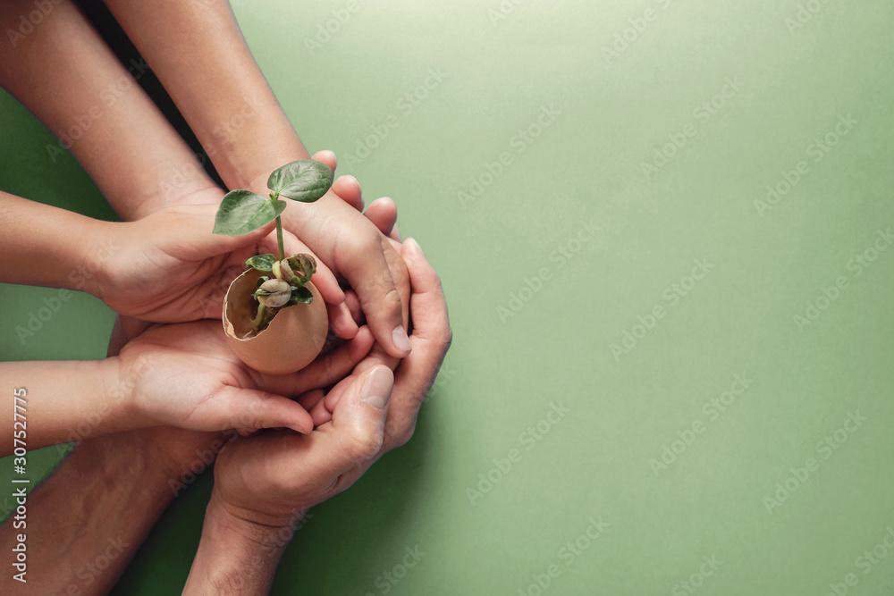 Fototapeta hands holding seedling in eggshells, montessori education , CSR social responsibility, Eco green sustainable living concept,zero waste, plastic free,world environment day, responsible comsumption