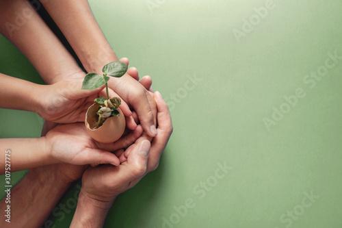 Obraz hands holding seedling in eggshells, montessori education , CSR social responsibility, Eco green sustainable living concept,zero waste, plastic free,world environment day, responsible comsumption - fototapety do salonu