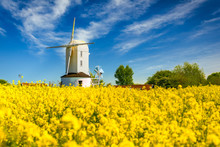 White Windmill In Yellow Rapeseed Field