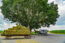 Amish Horse And Buggy Under The Big Tree Field Agriculture In Lancaster, PA US