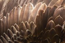 Close Up Of Beautiful Eagle Fe...