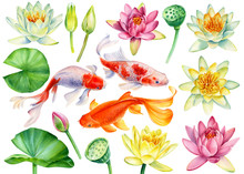 Set Of Koi Fish And Lotus Flowers, Leaves, Buds, Seeds On An Isolated White Background, Watercolor Clipart, Hand Drawn Painting