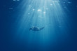 Sea turtle in the sea under water swims. Underwater shooting. Color of the year 2020. Main color trend concept.