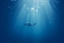 Sea Turtle In The Sea Under Wa...