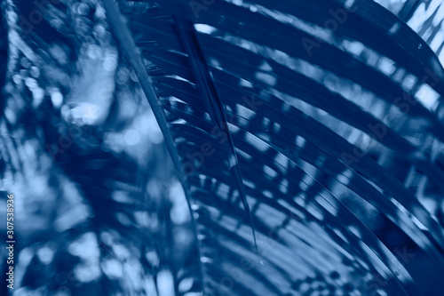 Close-up palm branch background tone color of the year 2020 Classic blue Canvas Print