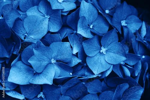 Fiori Azzurri.Quadri Fiori Azzurri Immagini Per Arredo