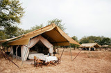 Fototapeta Sawanna - Luxury Safari tent camp in Serengeti Savanna forest - Glamping travel in Africa wild forest