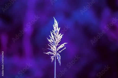 Selective focus shot of an exotic white plant with a purple background - 307563963