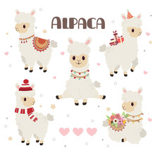 The Collection Of Cute Alpaca ...