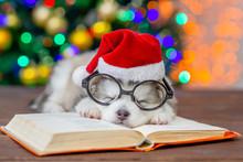 Funny Alaskan Malamute Puppy W...