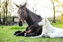 Friendship Between A Horse And A Dog