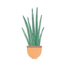 Sansevieria Cylindrica Housepl...