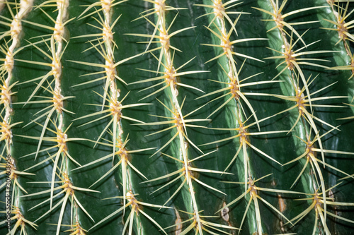 Close-up detail of the texture of an Echinocactus Grusonii cactus, in the Arganz Canvas Print