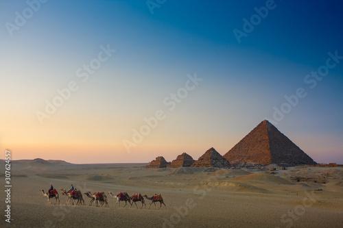 Spoed Fotobehang Kameel camel caravan at sunset at giza pyramids egypt