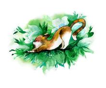 Cute Cat Stretches And Yawns A...
