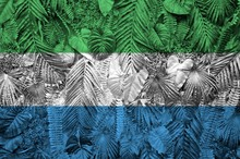 Sierra Leone Flag Depicted On Many Leafs Of Monstera Palm Trees. Trendy Fashionable Backdrop