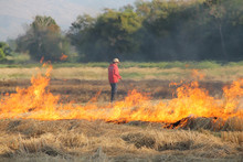 The Agricultural Waste Burning Cause Of Smog And Pollution