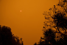 Australian Bushfire: Trees Silhouettes And Smoke From Bushfires Covers The Sky And Glowing Sun Barely Seen Through The Smoke. Smoke Haze. Catastrophic Fire Danger, NSW, Australia