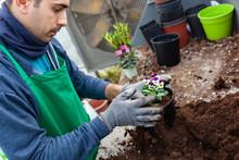 Gardener In A Greenhouse Trans...