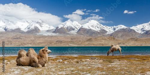 Foto Panorama with two camels at Lake Karakul