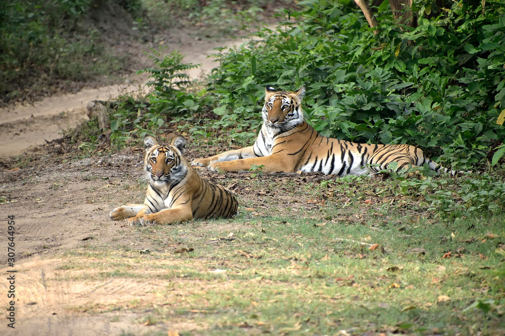 Jim Corbett national tiger reserve forest