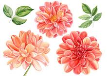 Beautiful Set Of Flowers Dahli...