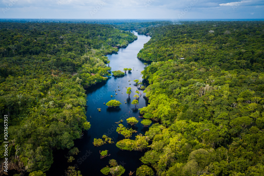 Fototapeta Amazon Rainforest in Anavilhanas National Park, Amazonas - Brazil