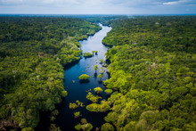 Amazon Rainforest In Anavilhan...