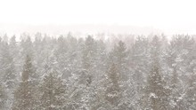 Forest In Winter Snowing