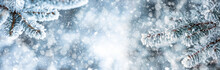 Pine Tree Branches Covered Frost In Snowy Atmosphere. Winter Panoramic Banner With Snowy Pine Branches