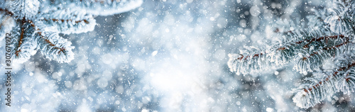 Fototapeta Pine tree branches covered frost in snowy atmosphere. Winter panoramic banner with snowy pine branches obraz