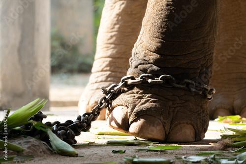 Fotografía  elephant bondage