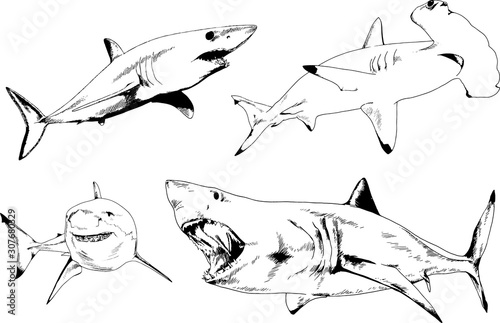 great white shark drawn in ink freehand sketch logo Wallpaper Mural