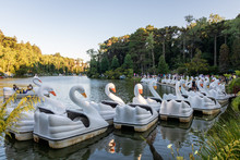 Swan-shaped Paddle Boats In Gramado In The South Of Brazil