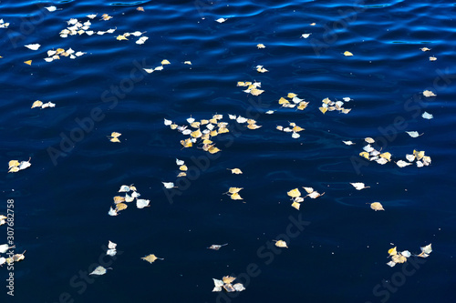 Yellow leaves on blue water Canvas-taulu