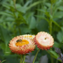 Three Orange Flowers With Soft...
