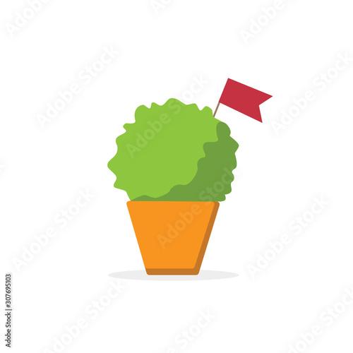 Fotografija manjerico plant with red flag ,santos populares