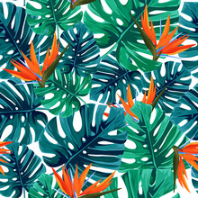 Exotic Tropical Pattern With M...