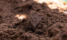 Clean Potting Soil For Cultiva...