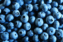 Background Of Ripe Blueberries...