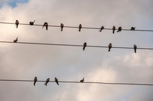 The Swallows Birds Are Sitting...