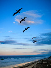 Soaring Sea Birds