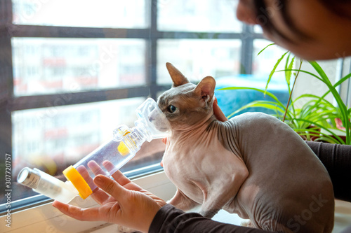 Young woman take care of a pet sphynx cat with asthma Canvas Print