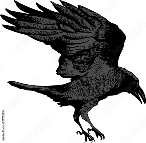 Valokuva vector image of a black raven flying for prey in artistic art outline style