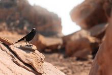 Black Bird On The Rock In Sandy Desert In Timna Park