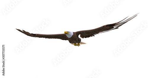 Tablou Canvas bald eagle floating on white background