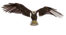 Bald Eagle Landing On White Ba...
