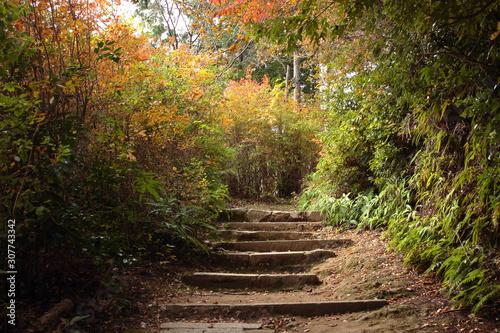 秋の山道 Canvas Print