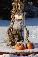 Scarecrow And Pumpkins In The Snow