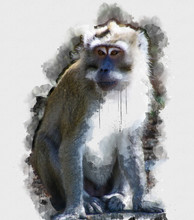 Digital Watercolor Painting Of Monkey. Painting Of Beautiful Image Of A Monkey In The Forest. Isolated Painting Of Cute Chimpanzee. Endangered Animal Abstract Paintings Wallpaper. Portrait Of Monkey